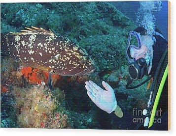 Scuba Diver With A Dusky Grouper Wood Print by Sami Sarkis