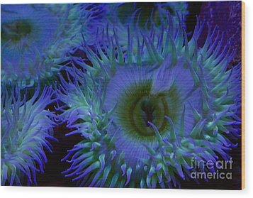 Sea Anemone Wood Print by Xn Tyler