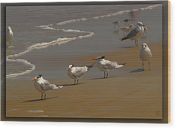 Sand And Sea Birds Wood Print by Barbara Middleton