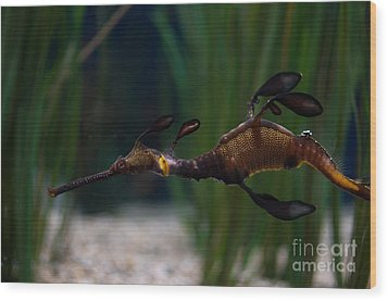 Sea Dragons Wood Print