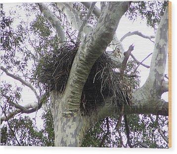 Sea Eagle Nest Wood Print by Joanne Kocwin