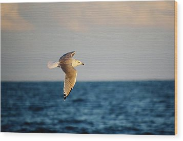 Sea Gull Over The Ocean Wood Print by Paulette Thomas