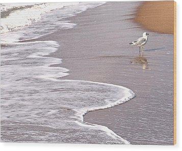 Sea Gull Reflection Wood Print by Cindy Lee Longhini