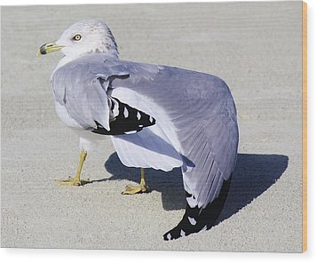 Sea Gull Stretching It Out Wood Print by Paulette Thomas