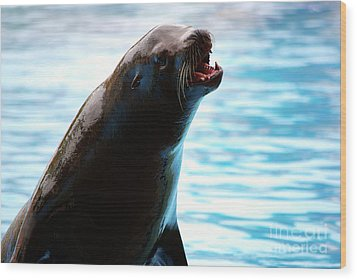 Sea-lion Wood Print by Carlos Caetano