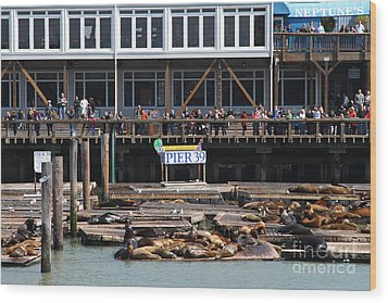 Sea Lions At Pier 39 San Francisco California . 7d14272 Wood Print by Wingsdomain Art and Photography