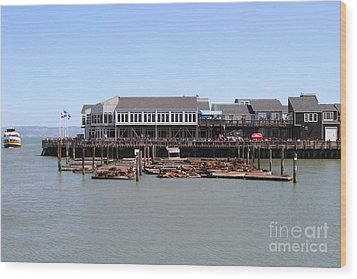 Sea Lions At Pier 39 San Francisco California . 7d14273 Wood Print by Wingsdomain Art and Photography