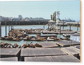 Sea Lions At Pier 39 San Francisco California . 7d14309 Wood Print by Wingsdomain Art and Photography