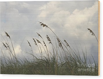 Sea Oats Wood Print by Blink Images