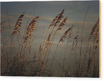 Wood Print featuring the photograph Sea Oats by Joetta West