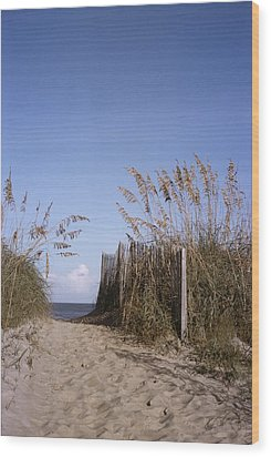 Sea Oats Line The Path Wood Print by Taylor S. Kennedy