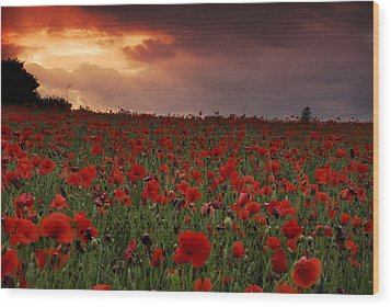 Wood Print featuring the photograph Sea Of Poppies by John Chivers