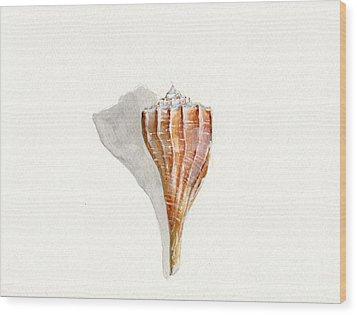 Sea Shell Watercolor Wood Print by Sheryl Heatherly Hawkins