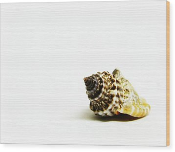 Sea Shell Wood Print by Weeping Willow Photography