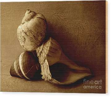 Sea Shells II Sepia Wood Print by Ann Powell