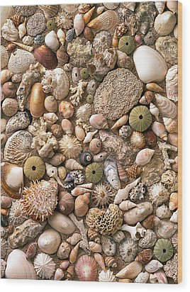 Sea Shells  Wood Print by Mauro Celotti
