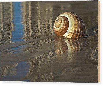 Sea Shells Wood Print by Renee Doyle