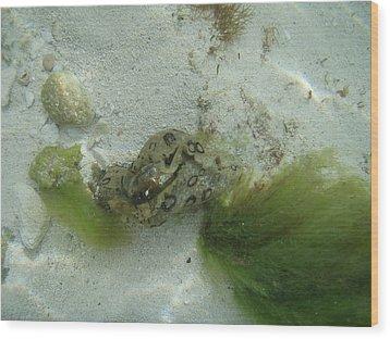 Sea Slug Wood Print by Kimberly Perry