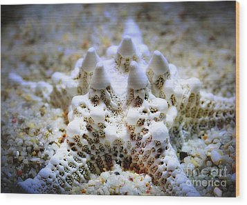 Sea Star Wood Print by Judi Bagwell