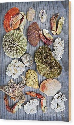 Sea Treasures Wood Print by Elena Elisseeva