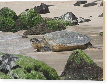 Sea Turtle 1 Wood Print