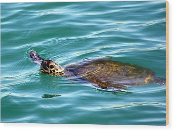 Wood Print featuring the photograph Sea Turtle by Jeanne Andrews