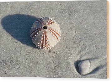 Sea Urchin And Shell Wood Print by Kenneth Albin