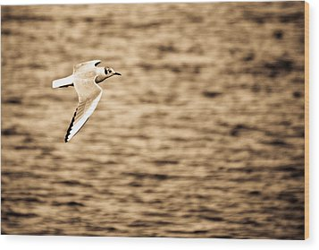 Seagull Antiqued Wood Print by Michelle Joseph-Long
