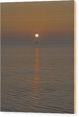 Seagull At First Light Wood Print by Gary Eason
