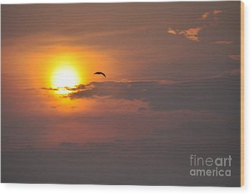 Seagull At Sunset Wood Print by Fred Fishkin