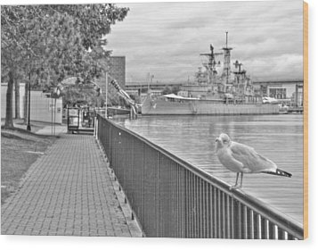 Wood Print featuring the photograph Seagull At The Naval And Military Park by Michael Frank Jr