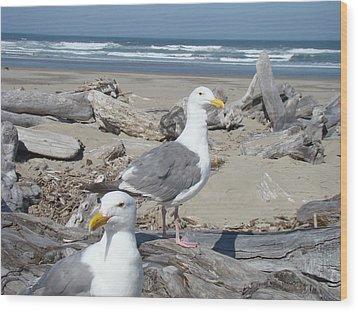 Seagull Bird Art Prints Coastal Beach Bandon Wood Print by Baslee Troutman