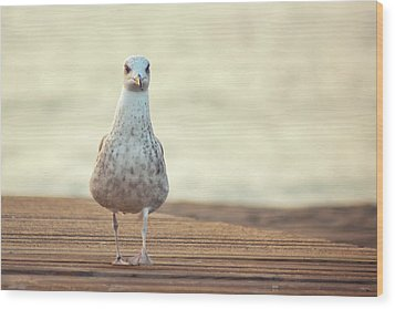 Seagull Wood Print by by Juanedc
