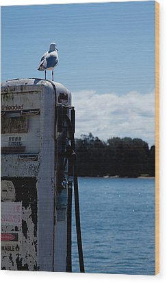 Wood Print featuring the photograph Seagull by Carole Hinding