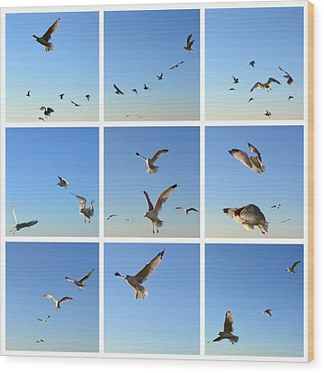 Seagull Collage 2 Wood Print by Michelle Calkins