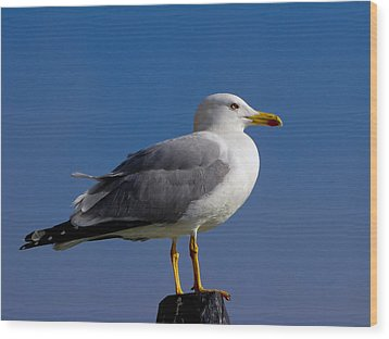 Wood Print featuring the photograph Seagull by David Gleeson