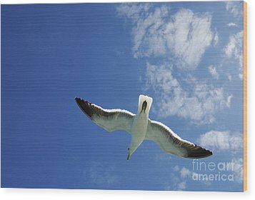 Seagull Flying In The Sky On Blue Sky Wood Print by Sami Sarkis