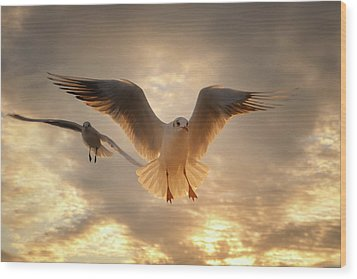 Seagull Wood Print by GilG Photographie
