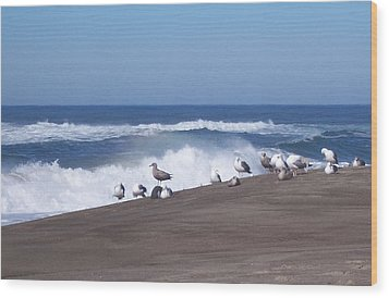 Wood Print featuring the photograph Seagull Hang-out by Peter Mooyman