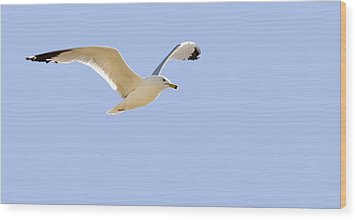 Seagull In Flight Wood Print by Don Hammond