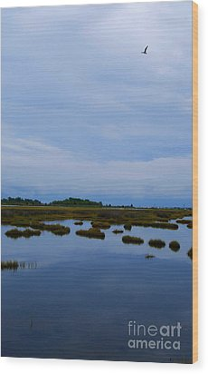Wood Print featuring the photograph Seagull In Flight by Linda Mesibov