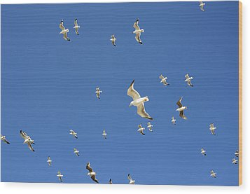 Seagull Wood Print by Johnny Greig