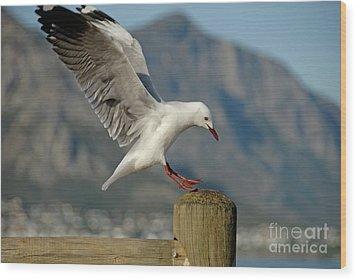 Seagull Landing On Pole Wood Print by Sami Sarkis