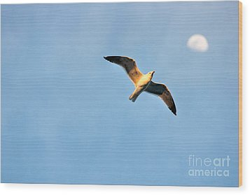 Wood Print featuring the photograph Seagull by Luciano Mortula