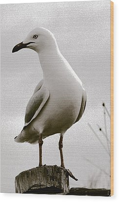 Seagull On Post Wood Print by Serene Maisey