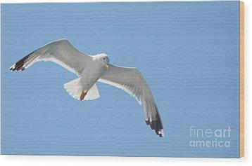 Seagull On The Sky Wood Print by Olga R