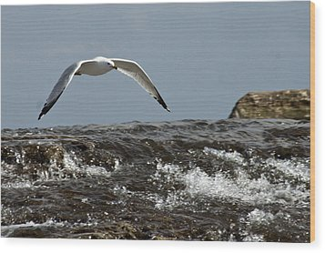 Wood Print featuring the photograph Seagull Overt The Rapids by Darleen Stry