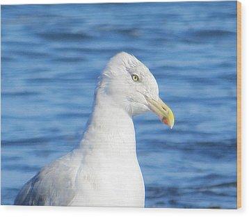 Seagull Wood Print by Pamela Turner