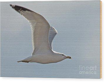 Seagull Soaring Wood Print by Darleen Stry