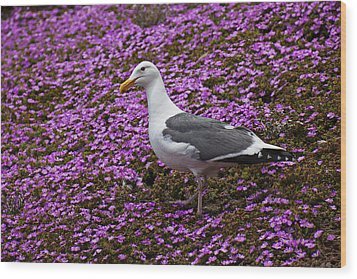 Seagull Standing Among Flowers Wood Print by Garry Gay
